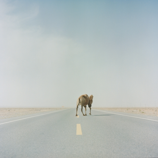 http://zhangboyuan.net/files/gimgs/1_boyuanzhang092018-a-camel-crossing-the-highway-of-taklimakan-.jpg